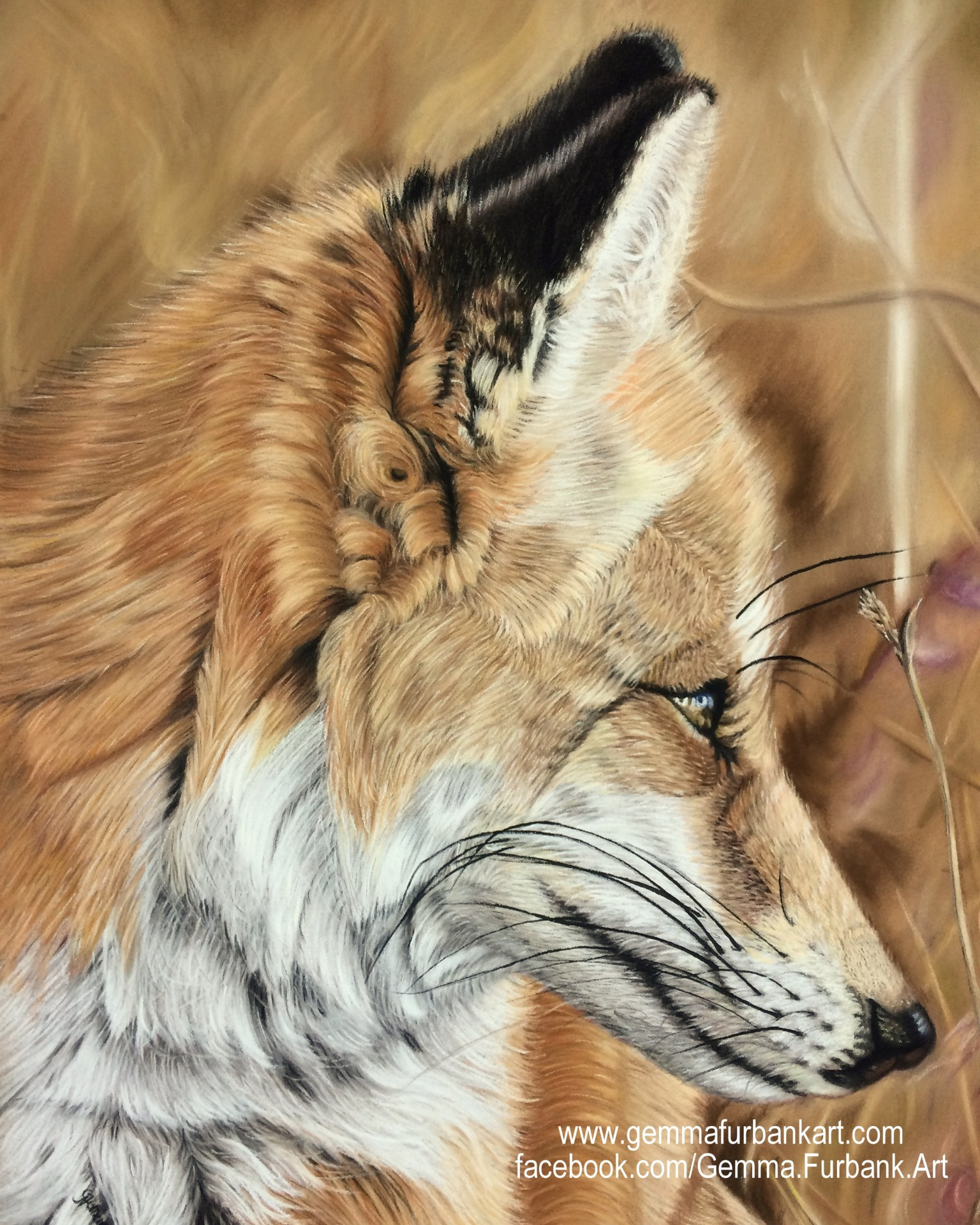 Red Fox in Soft Pastel